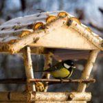 5-10.01.2018 r. Dbamy o ptaki zimą